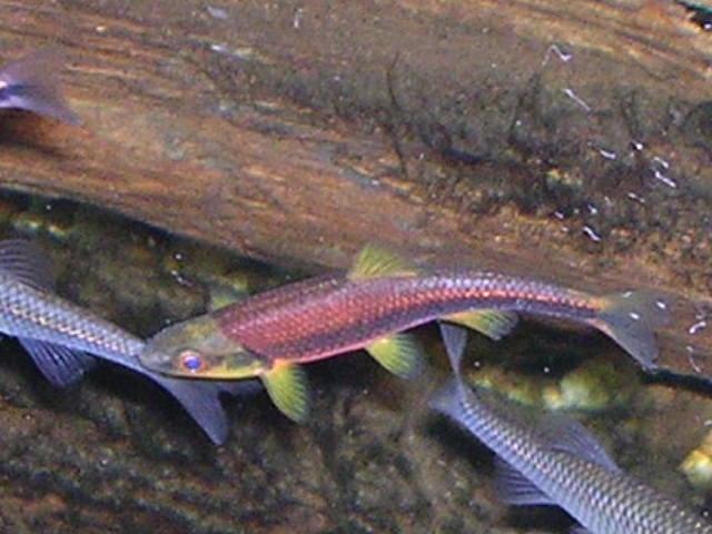 Jonah 39 s aquarium for Vente de poisson de bassin